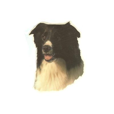Double Sided Dog Decal Border Collie