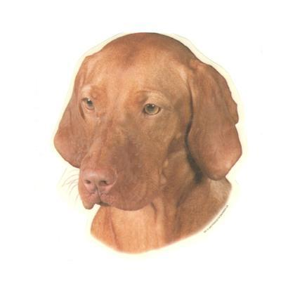 Double Sided Dog Decal Vizsla