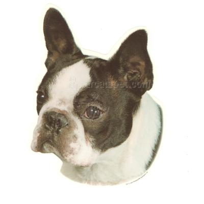 Double Sided Dog Decal Boston Terrier