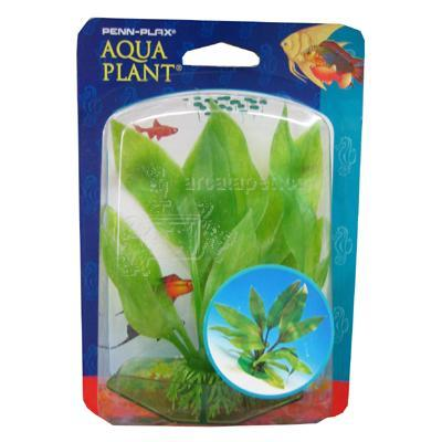 Amazon Sword Aquarium Plant Small