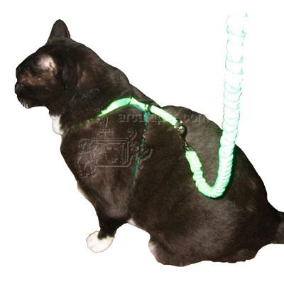 Come With Me Kitty Harness & Bungee Leash Electric Md