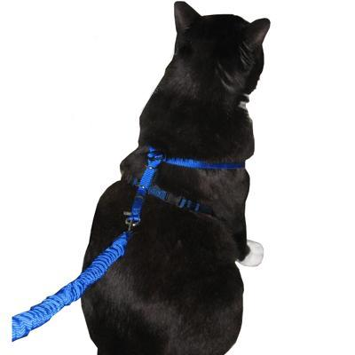 Come With Me Kitty Harness & Bungee Leash Blue Lg