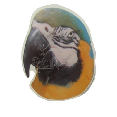 Double Sided Parrot Decal Macaw