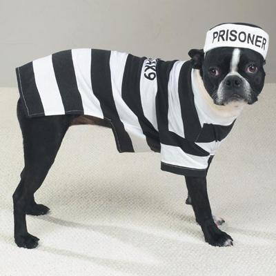 Casual Canine Prison Pooch Costume Dog Medium