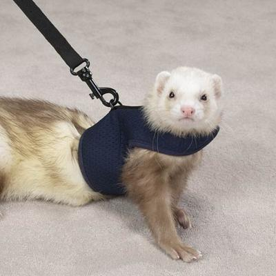 Biddie Buddies Ferret Harness & Lead Blue Large
