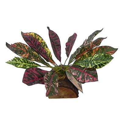 Tropical Terrace Large Croton Terrarium Plant