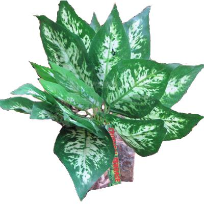 Tropical Terrace Sharp Leaf Terrarium Plant
