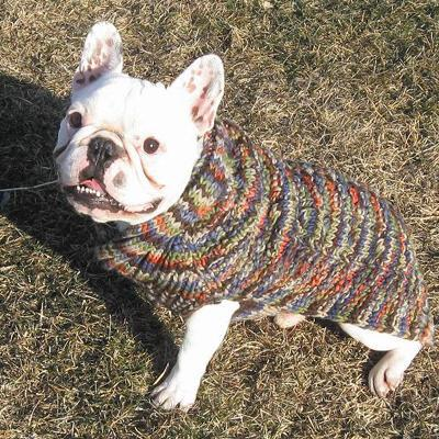 Handmade Dog Sweater Wool Multi-Colored Shawl  Small