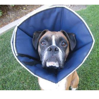 elizabethan collar for dogs how to put on