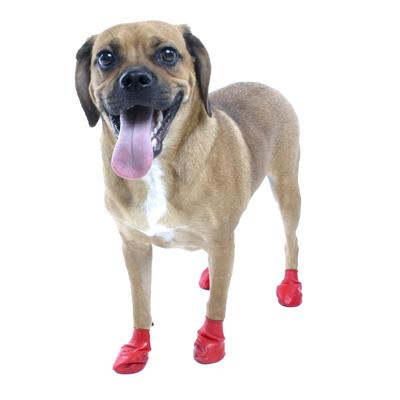 Pawz Natural Rubber Dog Boot Small 12pk
