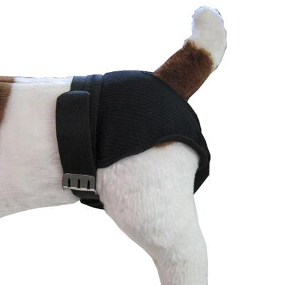 Sanitary Pants Garment for Female Dogs in Heat Medium