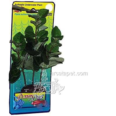 Bacopa Medium Plastic Aquarium Plant
