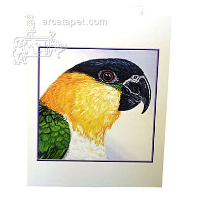 Note Card Black-headed Caique