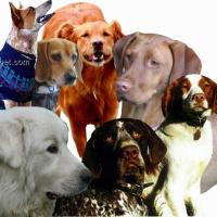 Dog Items by Breed