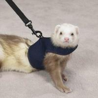 Ferret Leads and Harnesses