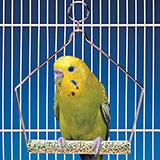 Penn Plax Swing Cement 4 inch Bird Toy