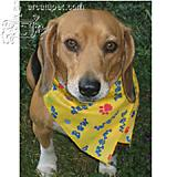 Dog Bandana Cotton-Blend Bow Wow Print