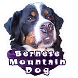 6-inch Vinyl Dog Decal Bernese Mountain Dog Picture