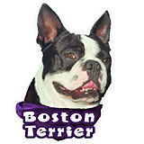 6-inch Vinyl Dog Decal Boston Terrier Picture
