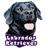 6-inch Vinyl Dog Decal Black Labrador Retriever Picture