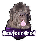 6-inch Vinyl Dog Decal Newfoundland Picture
