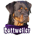 6-inch Vinyl Dog Decal Rottweiler Picture