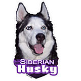 6-inch Vinyl Dog Decal Siberian Husky Picture