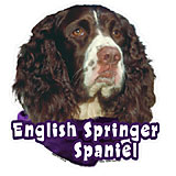 6-inch Vinyl Dog Decal Springer Spaniel Picture