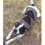 Handmade Dog Sweater Wool Gray Argyle XXSmall