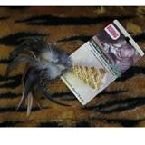 Kong Naturals Straw Cone and Feathers Cat Toy
