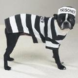 Casual Canine Prison Pooch Dog Costume Large