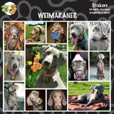 Arf Art Dog Sticker Pack Weimaraner