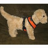 Comfort Control Dog Harness Orange XLarge