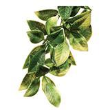 Exo Terra Mandarin MediumTerrarium Plant