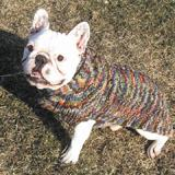 Handmade Dog Sweater Wool Multi-Colored Shawl XSmall