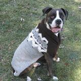 Handmade Dog Sweater Wool Aspen Grey Large