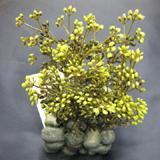 Fluval Chi Plant w/Cobblestone Base Aquarium Ornament