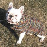 Handmade Dog Sweater Wool Multi-Colored Shawl Medium