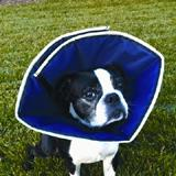 ProCone Soft  Elizabethan Small Collar for Dogs