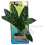 Lily Medium Plastic Aquarium Plant