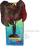 Red Lotus Medium Plastic Aquarium Plant