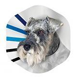 Kong EZ Clear Elizabethan Veterinary Collar Medium