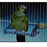 Acrylic Cement Bird Cage Perch Large
