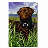 GR8 Dogs Chocolate Labrador Garden Flag