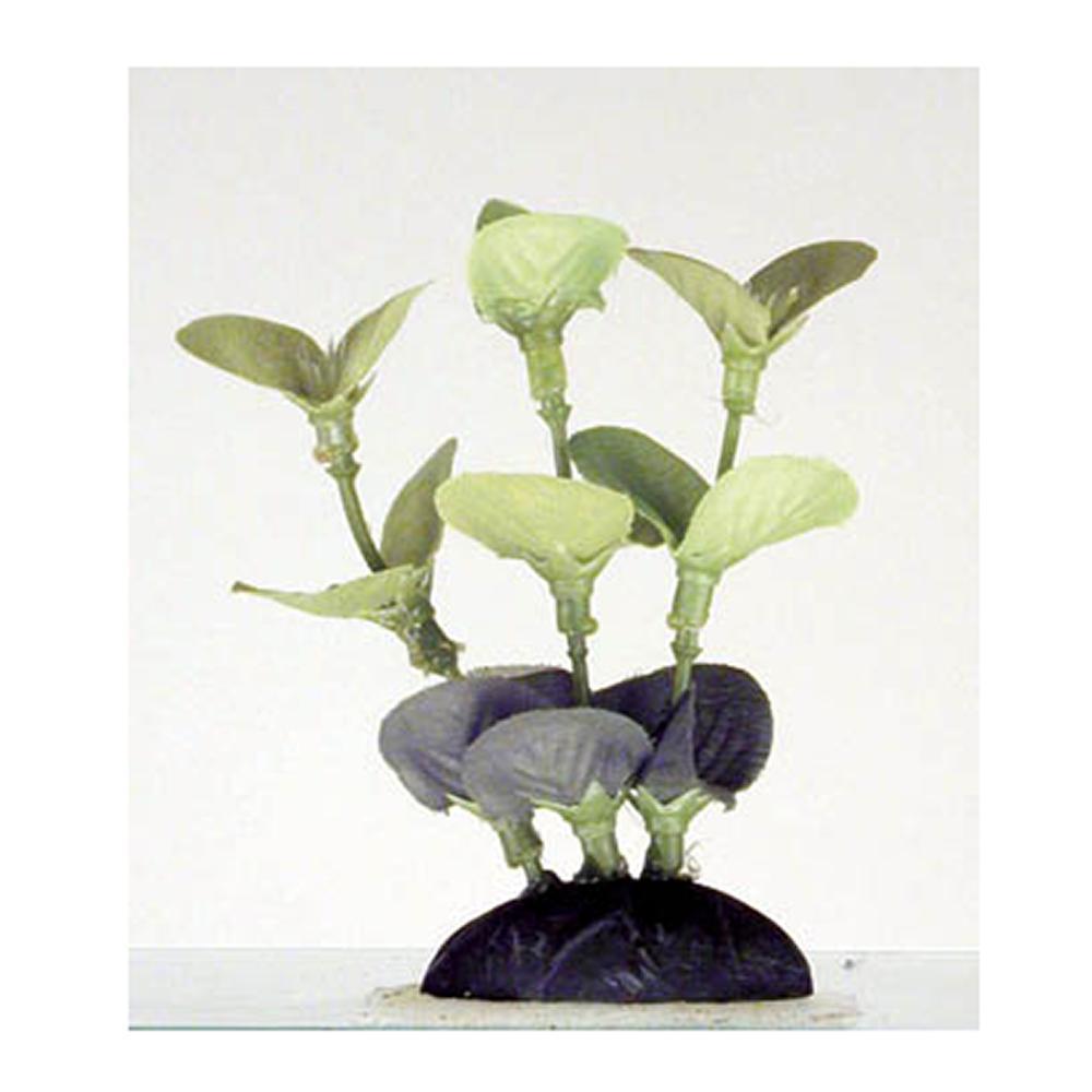 Ammania Foregrounder Silk Aquarium Plant