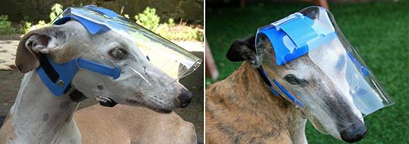 43dd5fdc2d The Optivizor for Whippets and Greyhounds is an one-of-a-kind eye protection  device designed specifically for long snouted dogs.