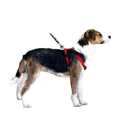 Adjustable Small Dog Harness 5/8-inch Red Nylon