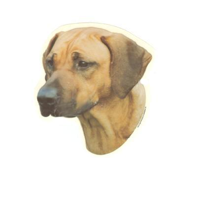 Double Sided Dog Decal Rhodesian Ridgeback