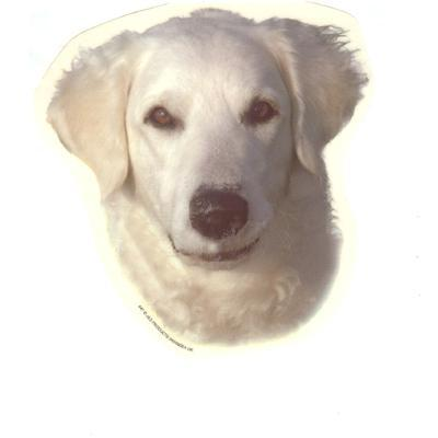Double Sided Dog Decal Kuvasz