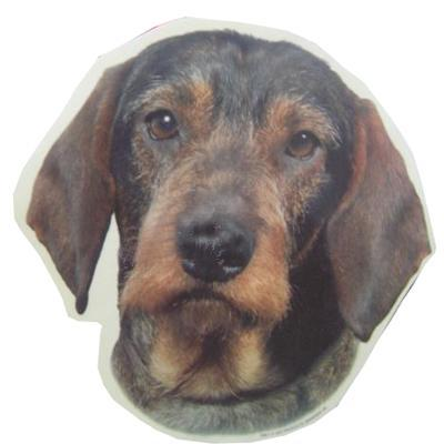 Double Sided Dog Decal Wirehaired Dachsund